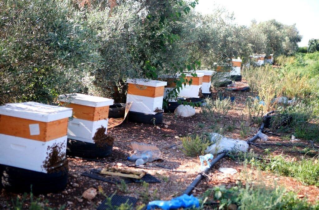 الرواد تقوم بإنتاج القطفة الثانية للعسل ضمن برنامج الإستثمار الزراعي